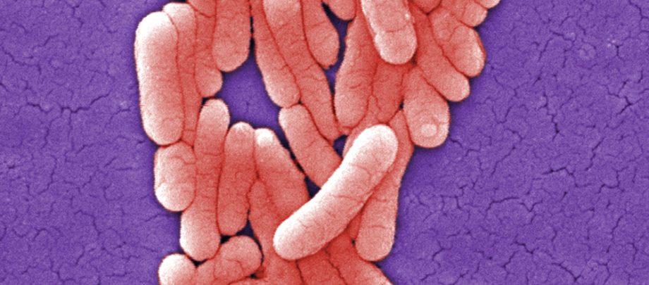 Uzdatnianie wody - bakterie